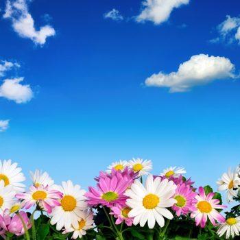 Gergi Tavan Çiçekli ve Ağaçlı Gökyüzü