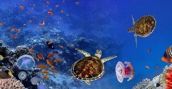 Gergi Tavan Denizaltı ve Akvaryum
