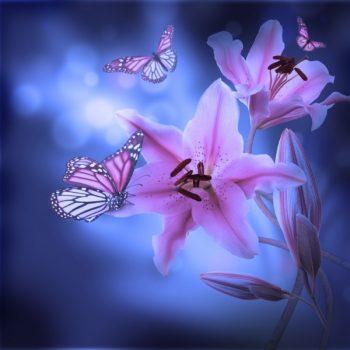 Gergi Tavan Çiçek Fotoğrafları