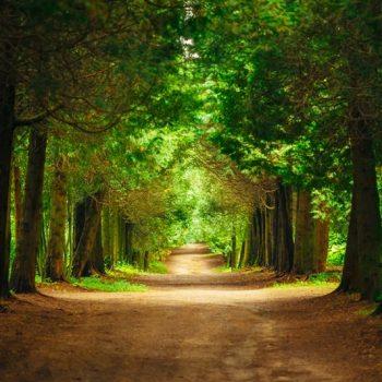 orman manzaralı gergi tavan